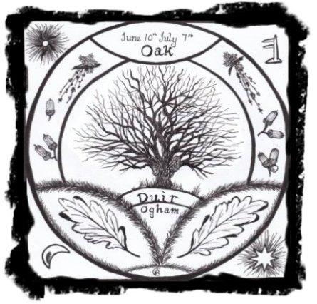 Duir - Oak 400