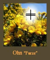 furze-card_thumb